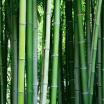 Is bamboo flooring a green choice?