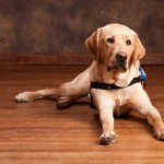 Is bamboo flooring good for dogs?