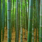 What other products are made from bamboo?
